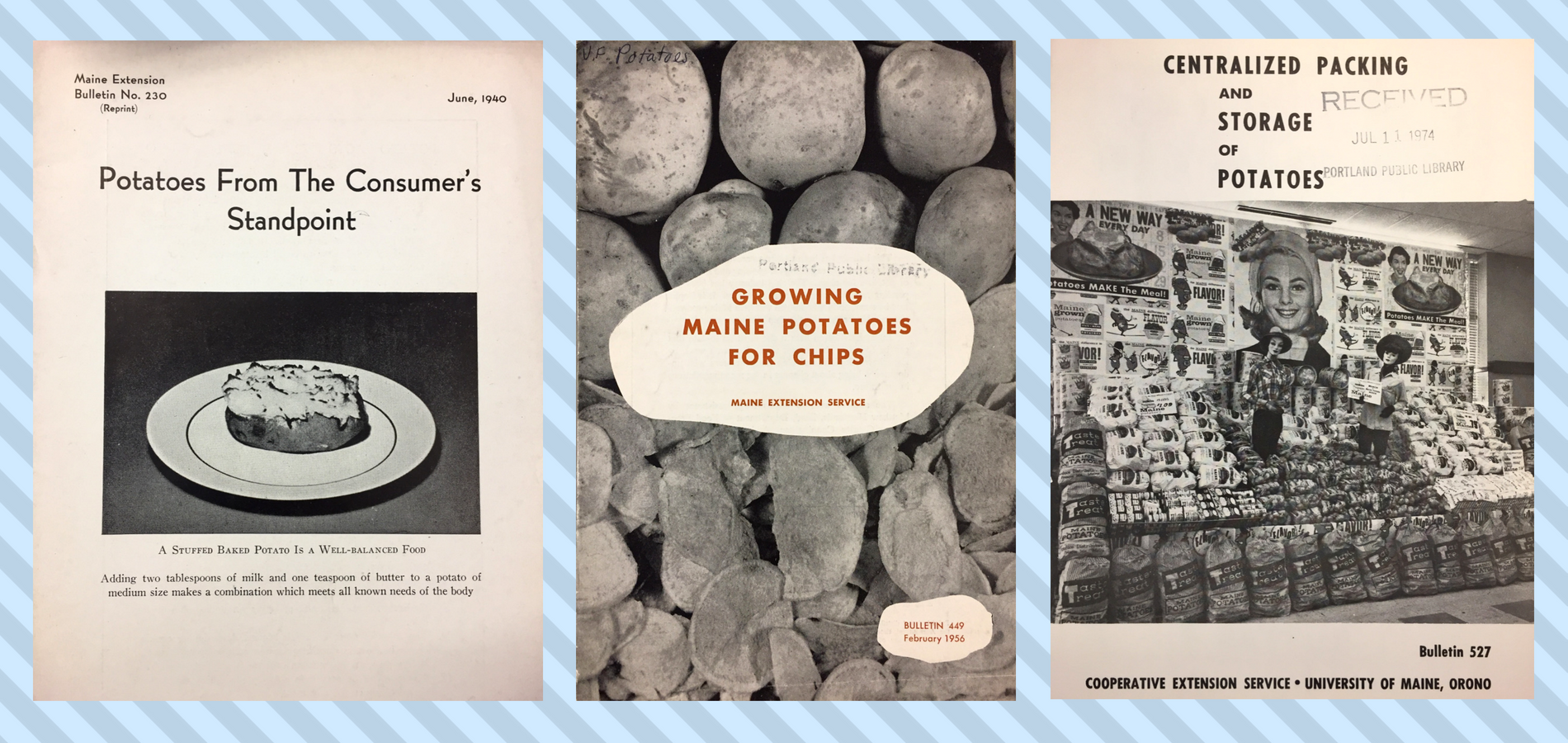 "Three bulletin covers all depicting potatoes: first, a potato on a plate with title ""Potatoes from the Consumer's Standpoint""; second, ""Growing Maine Potatoes for Chips"" shows both potatoes and chips; last, a display of potatoes packaged with advertisements."