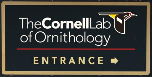 cornell lab of ornithology birds of the world